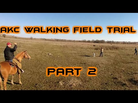 AKC Walking Field Trial! (PART 2)