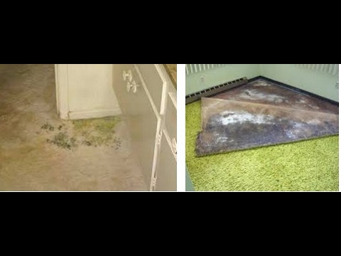 how to get mold out of carpet review - YouTube