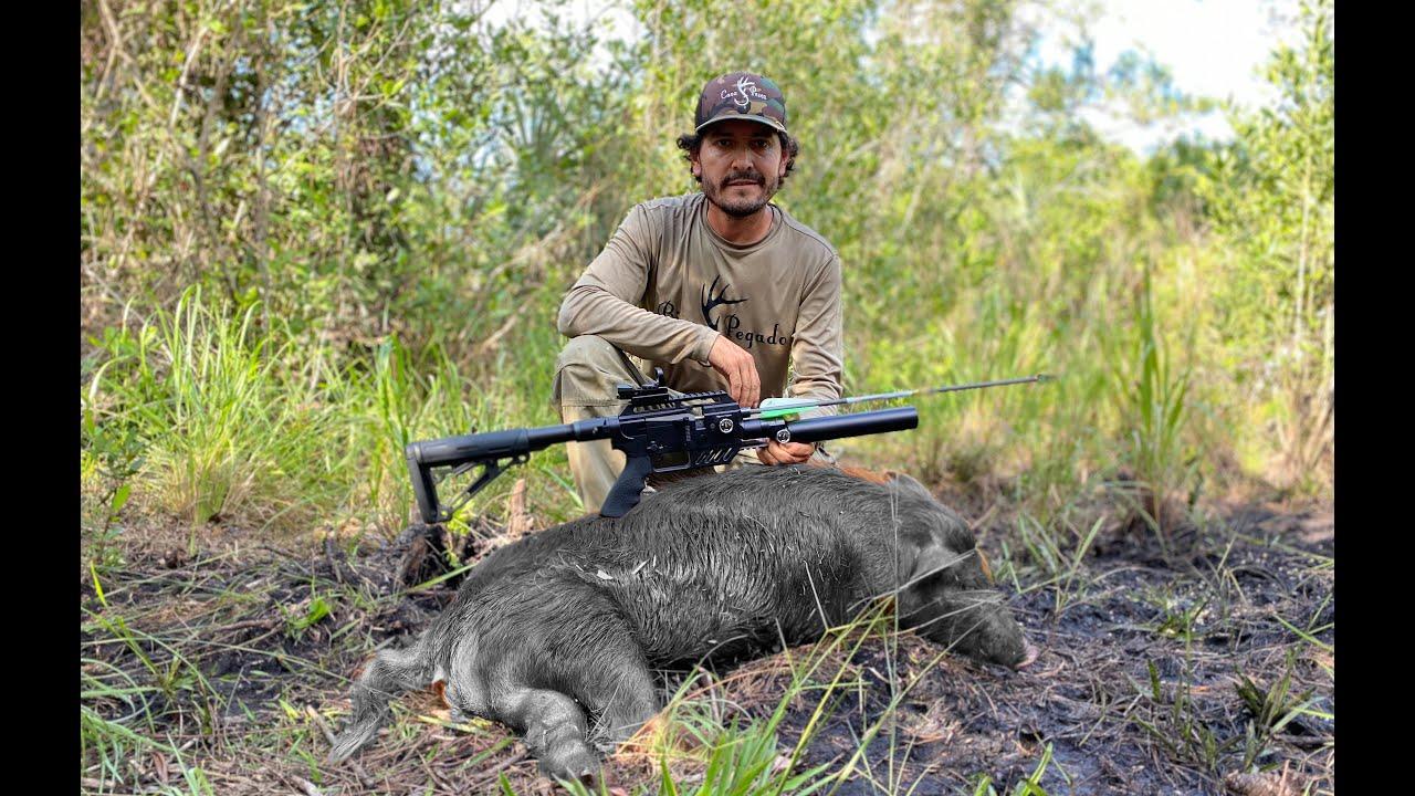 Caza Y Cocina De Puerco Con Rifle De Flecha