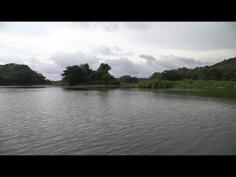 """Natural richness of Panama in lake with an """"abundance of alligators and crocodiles"""""""