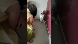 Oscar my dog
