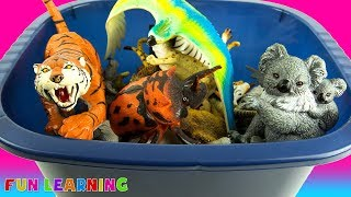 Kids Learn Wild Animals Names with a Fun Box of Toy Animals to Educate