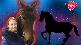 Урок верховой езды #4 / упражнения и езда на лошади/ Конно-Спортивная база ЦСКА