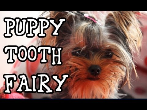 Tooth Fairy Exists? Funny Talking Dog