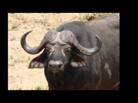 South Africa 2015 HD Tauck Elegant Adventure