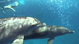 jeux avec dauphins tursiops 2015