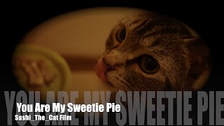 妥妥蠢萌 1颗心  You Are My Sweetie Pie - Sushi_The_Cat