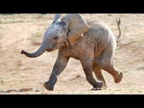 Lustige Tiere: Elefanten [Neues HD Video April 2014]