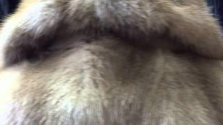 Полушубок из натуральной норки песочного цвета классика(Интернет-магазин FUR STAR каждую неделю обновляет свой ассортимент новыми норковыми шубками, полушубками,..., 2015-09-21T20:33:20.000Z)