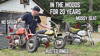 We Bought 8 CHEAP ABANDONED Honda Mini Bikes... Can We Make Them Run & Ride?
