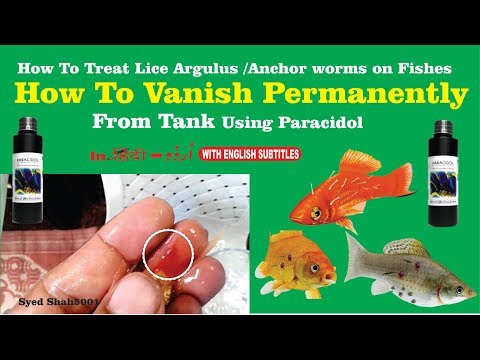 How To Remove Fish Lice, Flukes, Anchor Worm , HOW To Vanish Permanently