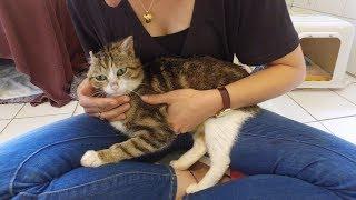 Tierheim Ostermünchen: Kater Vincent sucht ein neues Zuhause