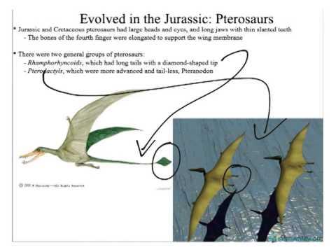 Historical Geology: Mesozoic, Sauropods 2, Stegosaurids, Ornithopods, Pterosaurs, & Birds