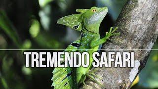 Tortuguero, paraíso tropical en Costa Rica