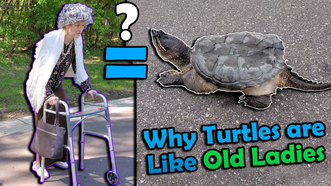 How to Help Turtles Cross the Road! (Old Lady Version)