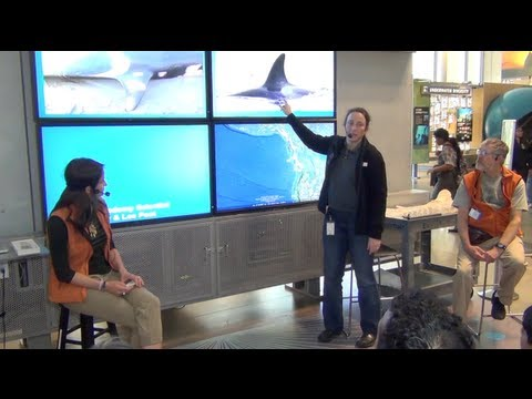 Moe Flannery & Lee Post, Orca Articulation - Chat with an Academy Scientist