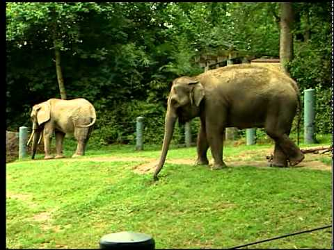 Comcast Neighborhoods features Seattle's Woodland Park Zoo