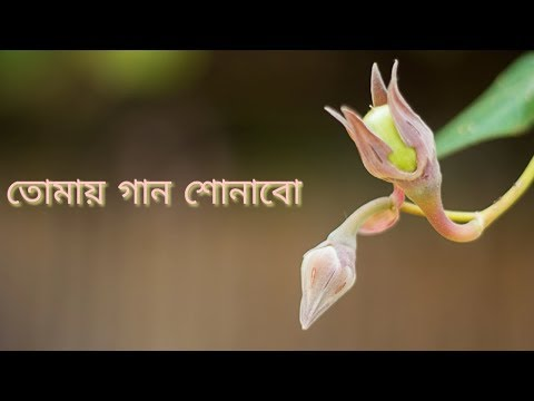 Tomay gaan sonabo Rabindra Sangeet WhatsApp Status by Lyrics Wise Status
