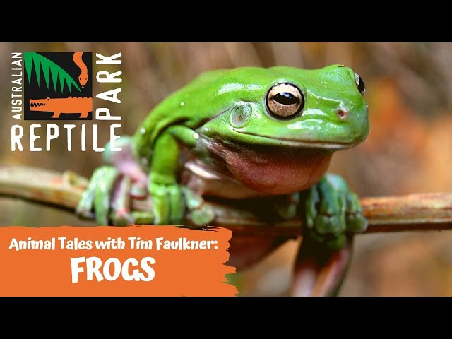 ANIMAL TALES WITH TIM FAULKNER | EPISODE THREE | LIFE CYCLE OF FROGS