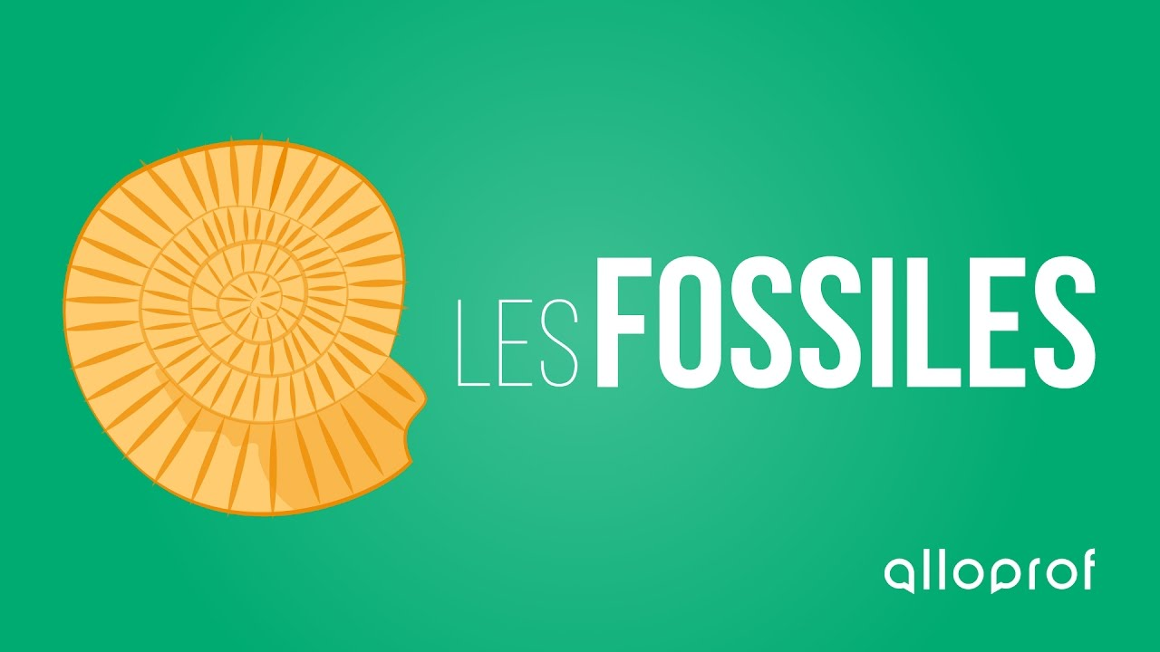 datation absolue utilise ce pour déterminer l'âge de la fossile