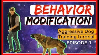 Behavior Modification with a fearful Aggressive German Shepherd Part 1