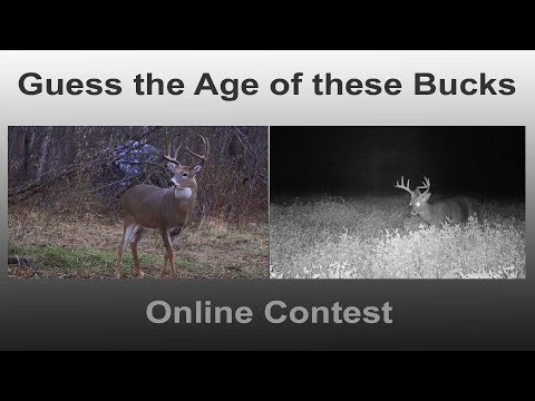 Guess the Age of these two Whitetail Deer