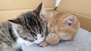 Parece que los gatitos están contando una historia secreta