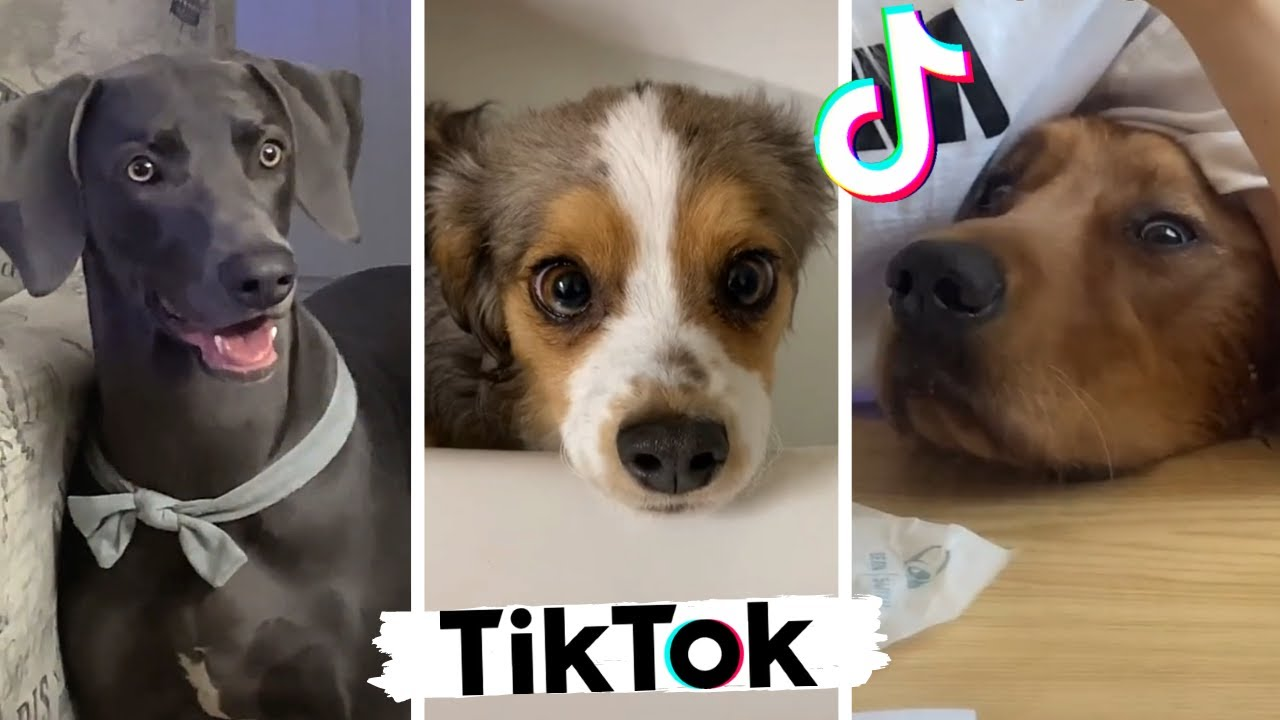 Ultimate Funniest Doggos & Cutest Puppies of TIKTOK ~ Best Compilation!