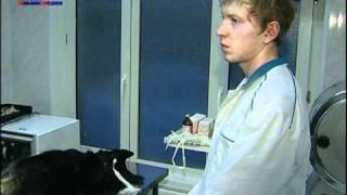 Ветеринарные клиники ТИМ(Ветеринарные клиники ТИМ. Терапия, хирургия, травматология, стоматология, вакцинация, УЗИ-диагностика,..., 2011-02-22T20:29:20.000Z)