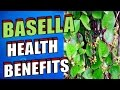 Amazing Health Benefits of Basella or Alugbati, Malabar Spinach, Indian Spinach & Vine Spinach