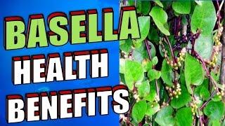Amazing Health Benefits of Basella or Alugbati, Malabar Spinach, Indian Spinach & Vine Spinach