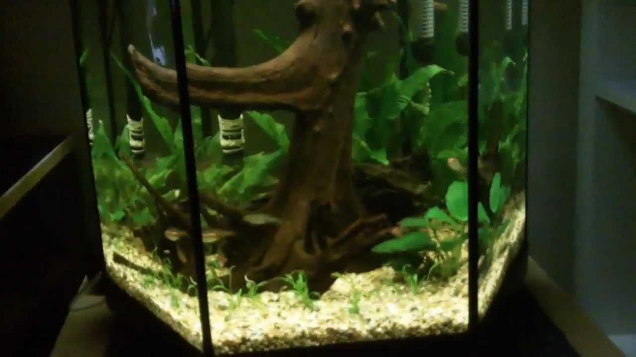 16g 60l aquael planted aquarium youtube. Black Bedroom Furniture Sets. Home Design Ideas