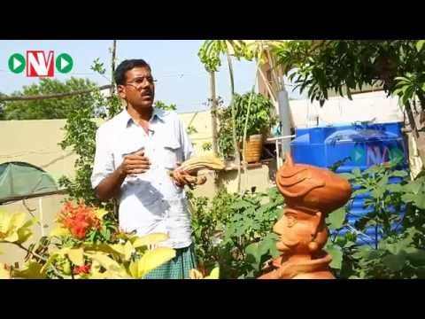 how-to-choose-the-best-seeds-for-your-garden-raghothama-reddy-5