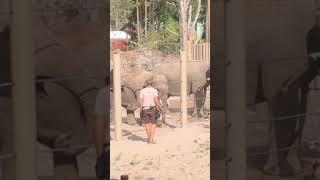 Kolmården: elefanterna 2018 del2