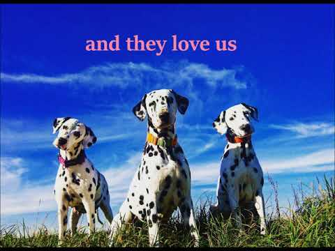 the largest family of Dalmatian dogs from Croatia