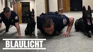 """Dieser Polizeihund kann """"Liegestütze"""" - Sportliche Spürnase"""