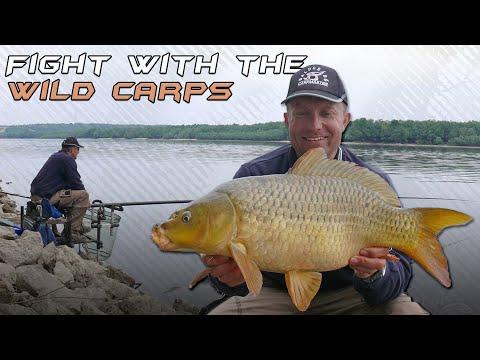 Döme Gábor - Vadvízi kalandok 9. rész - Vad pontyokkal küzdöttem a Dunán