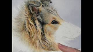 Collie Pastel Demonstration by Roby Baer PSA