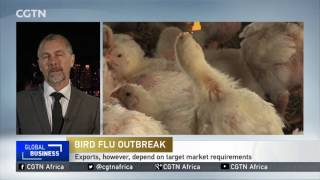South Africa bans sale of live hens to control outbreak of H5N8