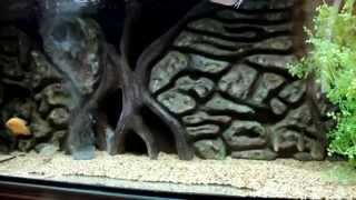 Интерактивный аквариумный туризм №5(Рубрика, куда вы присылаете свое видео и описание аквариума, а мы делаем из этого выпуск. Тема для Заявок:..., 2014-10-11T23:01:32.000Z)