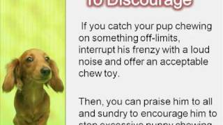 How To Stop Excessive Puppy Chewing