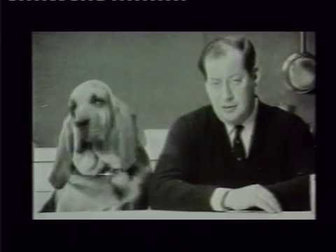 Dog Food Advert Featuring Henry The