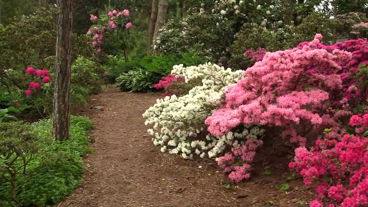 Beautiful Flowers - Brueckner Rhododendron Gardens - YouTube