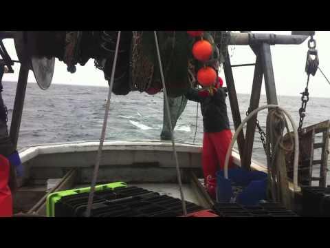 Groundfishing In Jeffreys Ledge, Gulf Of Maine