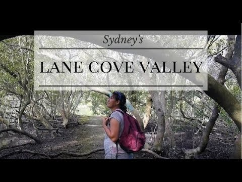 Free in Sydney: Get Off The Tourist Trail at the Lane Cove Valley Walk