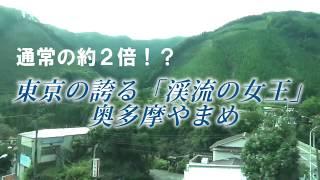 通常の約2倍!?東京の誇る「渓流の女王」奥多摩やまめ