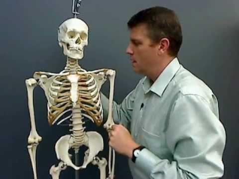 Major Axial bones.wmv