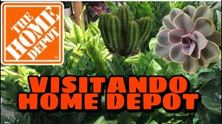 Tour de la tienda Home Depot suculentas plantas de interior