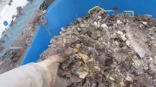 Cleaning Chicken Coop - Deep Litter Method