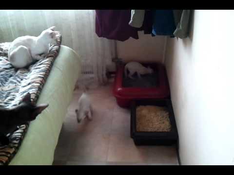 video-2010-09-11-13-58-06.3gp